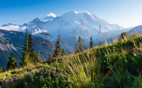 Picture the sky, grass, trees, flowers, freshness, mountain, trail, plants, slope, day
