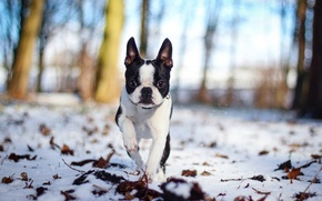 Picture snow, nature, dog