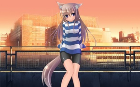 Wallpaper Ponytail, Fox, Ears, Legs, The city