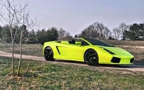 Picture nature, green, Lamborghini, lamborghini gallado spyder