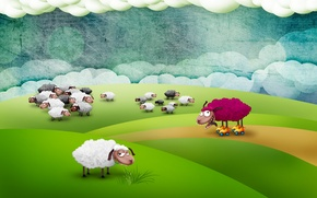 Picture field, sheep, mad sheep