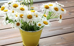 Picture flowers, chamomile, bouquet