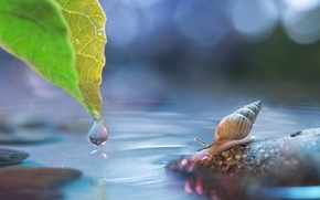 Picture water, sheet, glare, stone, drop, snail