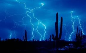 Picture the storm, lightning, desert, cactus