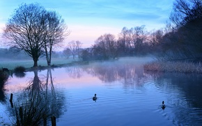 Picture lake, duck, morning