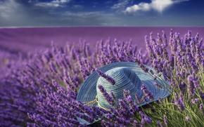 Picture summer, hat, lavender