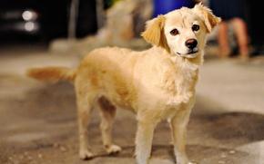 Wallpaper dogs, face, dog, beautiful, dog