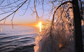 Picture ice, sea, the sun, tree, icicles