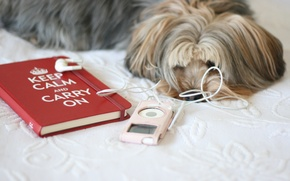 Picture red, background, pink, the inscription, Wallpaper, mood, bed, dog, player, Notepad, dog, owner