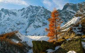 Picture autumn, the sky, snow, mountains, stones, tree, rocks