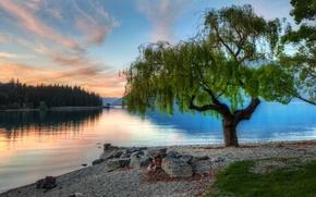 Picture sunset, lake, tree, New Zealand