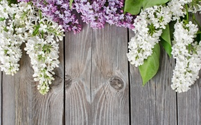 Picture background, tree, Board, Lilac