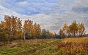 Picture autumn, trees, landscape, the suburbs