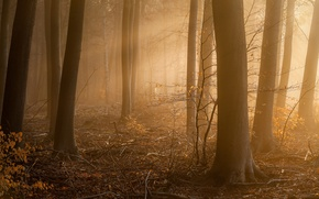 Picture forest, fog, morning, Approach