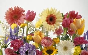 Picture Color, Bouquet