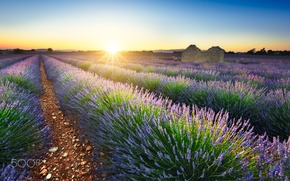 Picture field, summer, the sun, nature, France, lavender