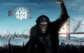 Picture bridge, monkey, San Francisco, Rise of the Planet of the Apes, Rise of the planet …