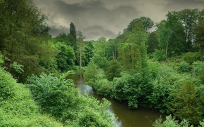 Picture greens, forest, storm, nature, river, green, storm, forest, Nature, river