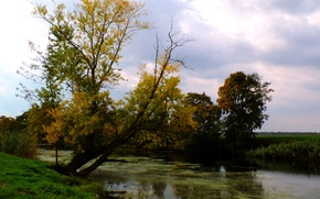 Picture green, river, nature, yellow, autumn