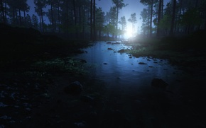 Wallpaper forest, water, trees, stones, dawn, morning