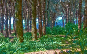 Picture forest, trees, trunks, Wallpaper from lolita777