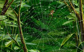 Wallpaper leaves, web, spider