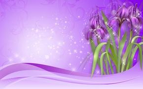 Picture purple, figure, irises