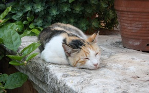 Picture cat, flowers, sleeping, pot