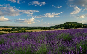 Picture field, the sky, clouds, home, lavender, farm