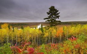 Picture autumn, forest, the sky, nature, river, overcast, hills, beautiful, birch