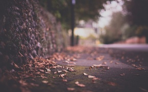 Wallpaper macro, foliage, fence, road, glare, autumn, the city