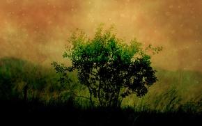 Wallpaper tree, figure, greens, darkness