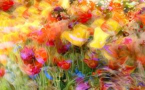 Picture field, flowers, nature, rendering, Mac, Tulip, meadow