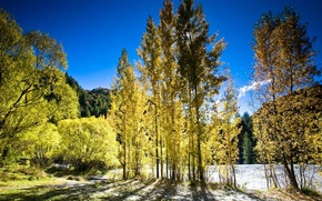 Picture autumn, light, trees