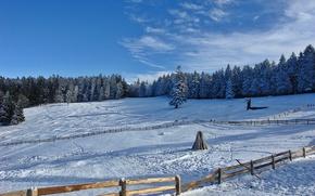 Picture winter, snow, cold