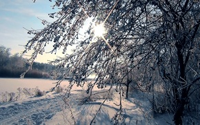 Picture frost, forest, the sun, snow, trails, Winter, Siberia