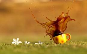 Wallpaper grass, drops, flowers, squirt, tea, coffee, orange, Cup, drink
