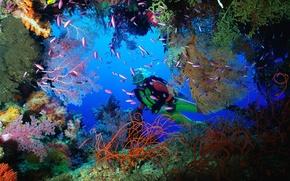 Picture Cave, Corals, Fiji