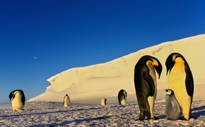 Picture winter, snow, the moon, penguins, frost, ice, Antarctica
