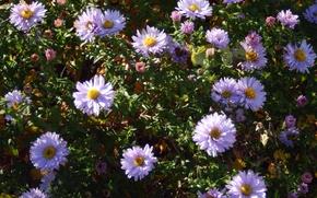 Picture autumn, flower, flowers, background, widescreen, blue, petals, petal, wallpaper, widescreen, background, beautiful Wallpaper, the Wallpapers, …