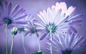 Picture water, drops, flowers, Rosa, petals, stem