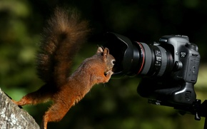 Picture curiosity, the camera, red, protein