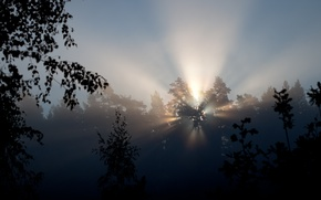 Picture rays, light, trees, nature, morning