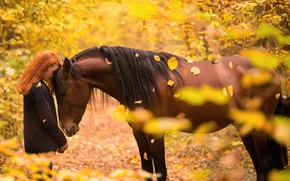 Picture autumn, girl, horse