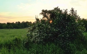 Picture forest, summer, The evening, dawn, sun.Bush