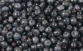 Wallpaper blueberries, black, sweet