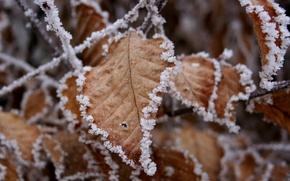 Wallpaper sticking, snow, leaves