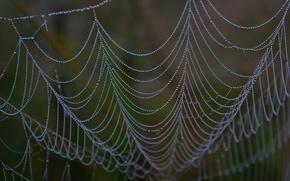 Wallpaper Web, drops