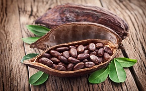 Picture leaves, peel, cocoa beans