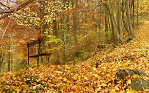 Picture autumn, forest, bench, foliage